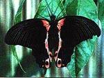 40 - Serre aux papillons